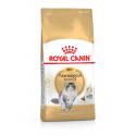 Royal Canin Norwegian Forest Cat para gato to